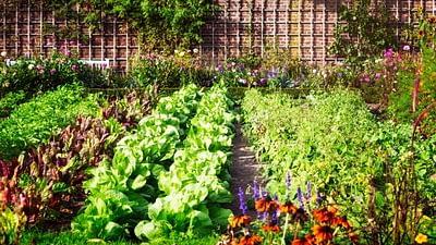 veggies garden
