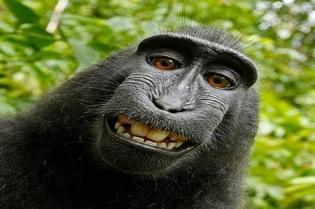 monkey self